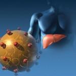 Вирусный гепатит С, его опасность для пациентов с ослабленным иммунитетом