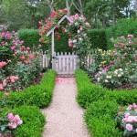 От розы до сакуры